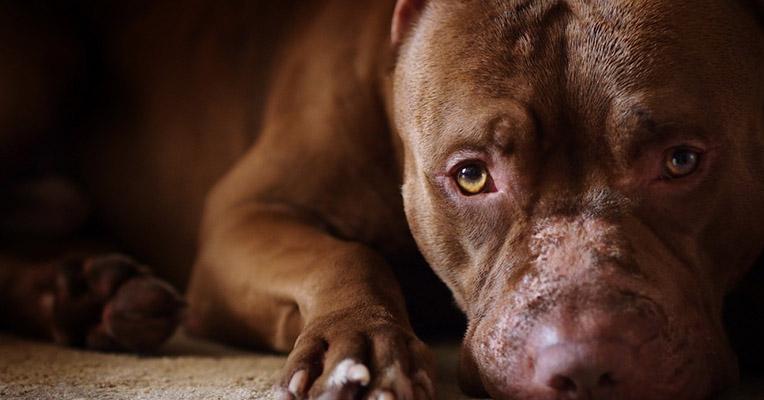 Φιλοζωικός Καλαμάτας - Κακοποίηση ζώου